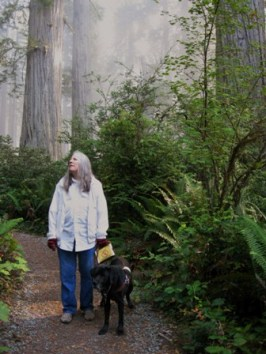 Donna & her guide dog Hunter walk along path in Redwoods. There's a glowing mist: Photo by Rich Hill