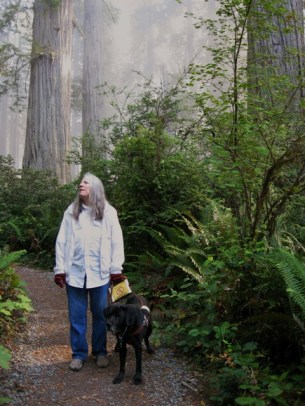 Donna W. Hill, author of the educator-recommended novel The Heart of Applebutter Hill, & her guide dog Hunter walk along path in California Redwoods in Sept. 2009. There's a glowing mist: Photo by Rich Hill.