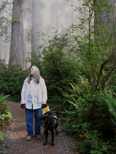 Donna W. Hill, author of the educator-recommended novel The Heart of Applebutter Hill, & her guide dog Hunter walk along path in California Redwoods. There's a glowing mist: Photo by Rich Hill.