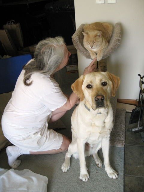 Donna with her new yellow Lab guide dog, Mo, and rescued strawberry-blonde tabby Goofus: photo by Rich Hill.